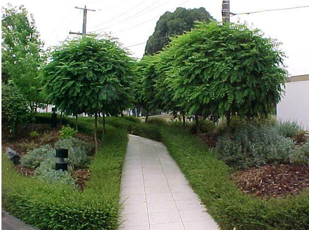 Medžiai Rutuli Komis Lajomis Architektūra Projektavimas